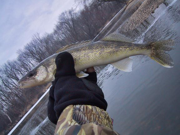 Night Time Cold Water Fox River Walleye